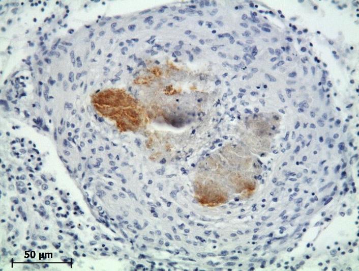 Pathological anatomy - Scienze Animali e Veterinarie :: Università ...